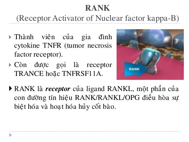 RANK (Receptor Activator of Nuclear factor kappa-B)  Thaønh vieân cuûa gia ñình cytokine TNFR (tumor necrosis factor rece...