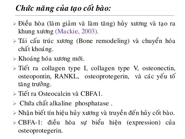 Chöùc naêng cuûa taïo coát baøo:  Ñieàu hoøa (laøm giaûm vaø laøm taêng) huûy xöông vaø taïo ra khung xöông (Mackie, 2003...