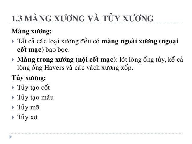 1.3 MAØNG XÖÔNG VAØ TUÛY XÖÔNG Maøng xöông:  Taát caû caùc loaïi xöông ñeàu coù maøng ngoaøi xöông (ngoaïi coát maïc) bao...