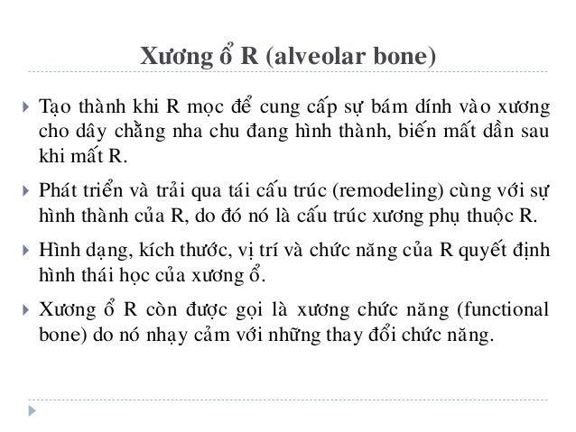  Taïo thaønh khi R moïc ñeå cung caáp söï baùm dính vaøo xöông cho daây chaèng nha chu ñang hình thaønh, bieán maát daàn ...