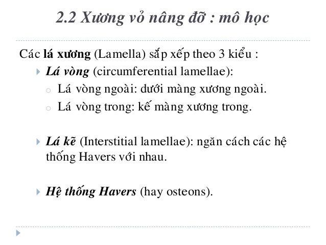 Caùc laù xöông (Lamella) saép xeáp theo 3 kieåu :  Laù voøng (circumferential lamellae): o Laù voøng ngoaøi: döôùi maøng ...