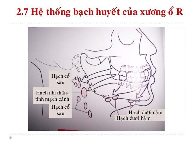 III. CAÁU TRUÙC HOÙA XÖÔNG (BONE MODELING) & TAÙI CAÁU TRUÙC XÖÔNG (BONE REMODELING)  Xöông laø moät moâ ñoäng (dynamic t...