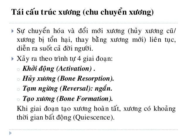 Khoaûng thôøi gian baát ñoäng (Quiescence) Caùc TB lieân keát xöông Taïo xöông môùi Khôûi ñoäng Huûy xöông Chaát daïng xöô...