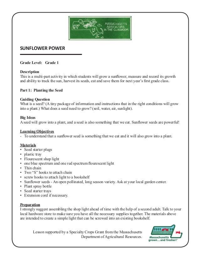Grade 1 School Garden Lesson Plan Sunflower Power Massachusetts