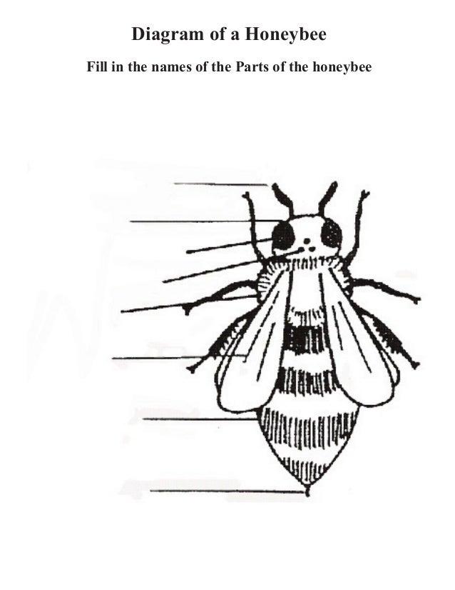 Diagram Of Bee Parts - Circuit Wiring And Diagram Hub •