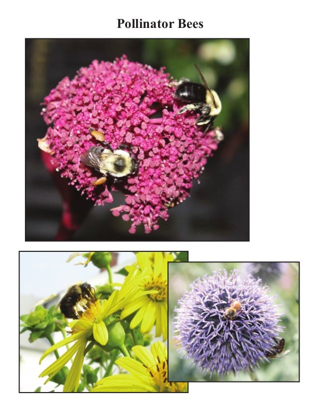 Grade 2 Garden Lesson Plan - Pollination Lesson; Busy Bees ~ M… on