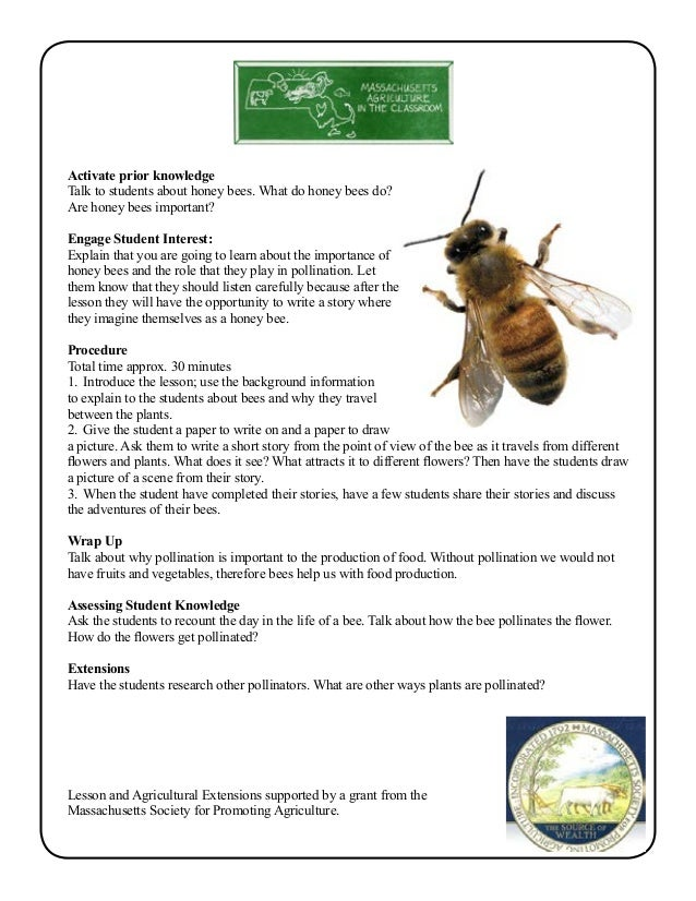 Grade  School Garden Lesson Plan  Pollination Lesson Travelling Ho