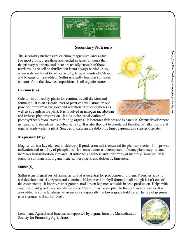 Grade 2 School Garden Lesson Plan Soil Lesson Plant Nutrition Ma – Gardening Lesson Plans