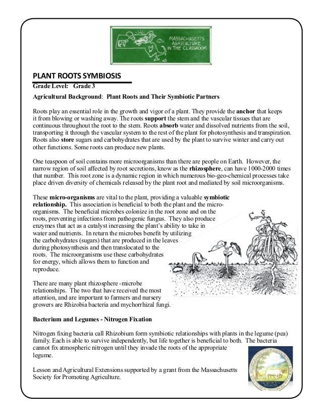 Grade 3 School Garden Lesson Plan Soil Lesson Plant Root Symbiosis – Gardening Lesson Plans