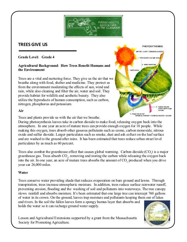 Grade 4 School Garden Lesson Plan Leaf Lesson Trees Give Us Mass – Gardening Lesson Plans