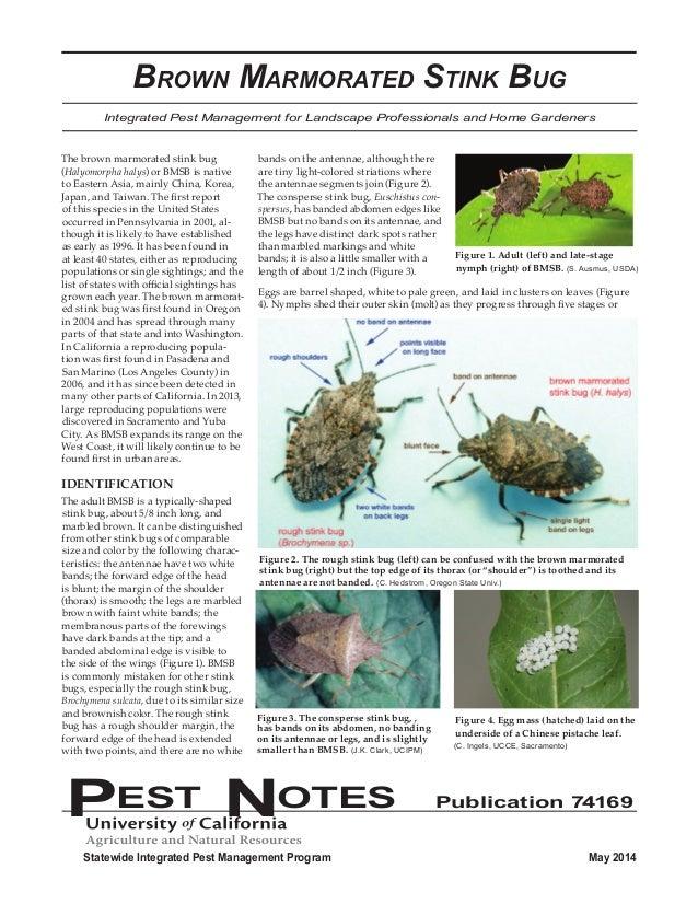 Stink Bug Anatomy