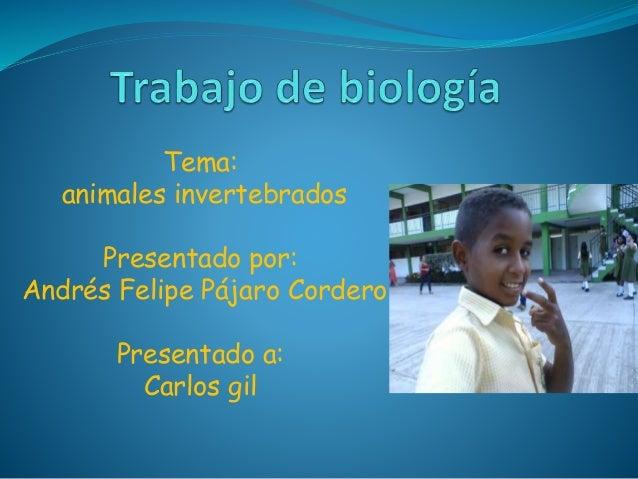 Tema: animales invertebrados Presentado por: Andrés Felipe Pájaro Cordero Presentado a: Carlos gil