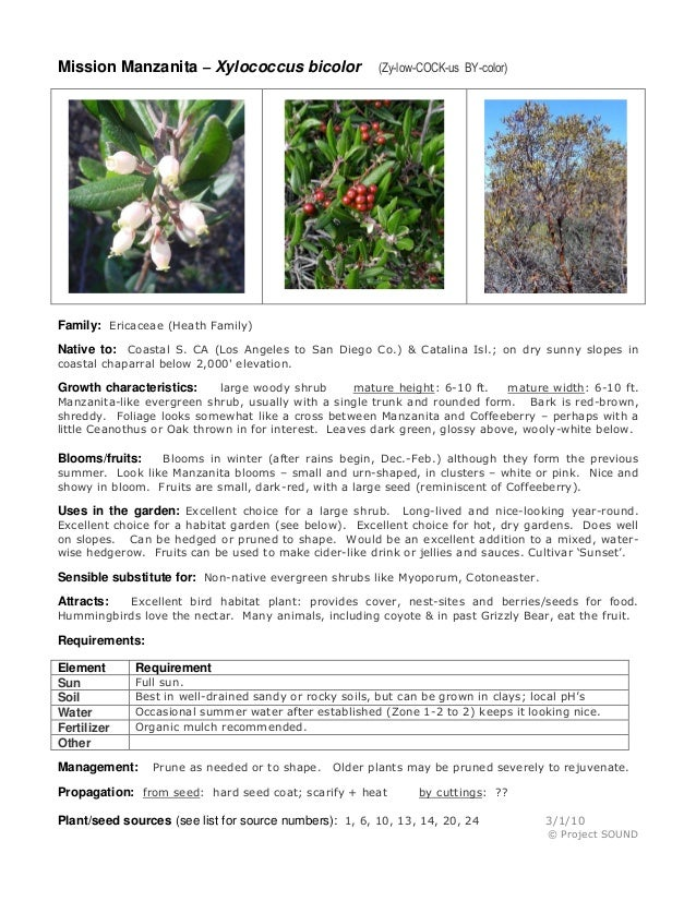 Mission Manzanita – Xylococcus bicolor  (Zy-low-COCK-us BY-color)  Family: Ericaceae (Heath Family) Native to: Coastal S. ...