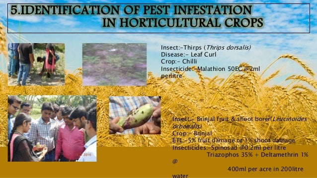 MAIN FEATURES :-  Less premium high insurance scheme.  Cereals, Pulses , Oilseeds and horticultural crops are included ....
