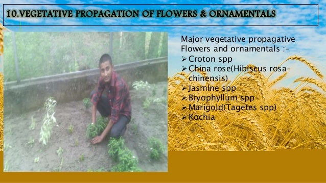 The students get aware about the real situation of crop production package and practices. We get to know about the avail...