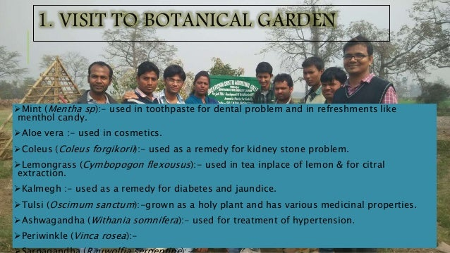 1. VISIT TO BOTANICAL GARDEN Mint (Mentha sp):- used in toothpaste for dental problem and in refreshments like menthol ca...