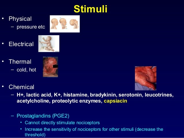 Stimuli • Physical – pressure etc • Electrical • Thermal – cold, hot • Chemical – H+, lactic acid, K+, histamine, bradykin...