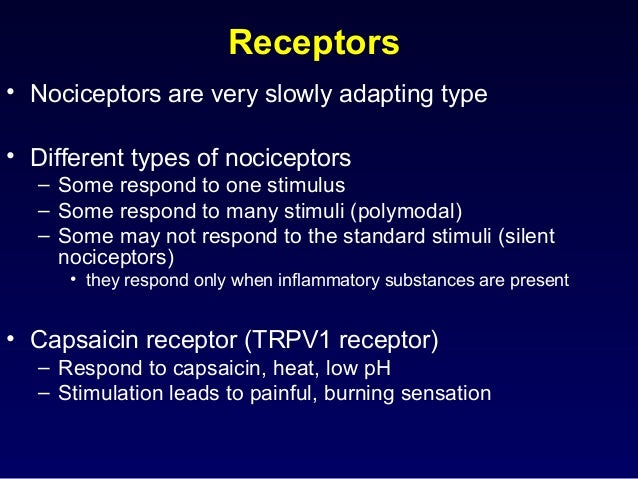 Receptors • Nociceptors are very slowly adapting type • Different types of nociceptors – Some respond to one stimulus – So...