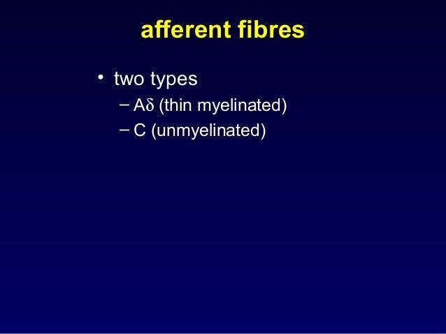 afferent fibres • two types – Aδ (thin myelinated) – C (unmyelinated)