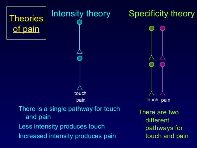 Theories of pain There is a single pathway for touch and pain Less intensity produces touch Increased intensity produces p...