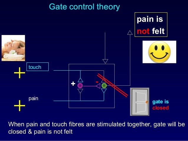 Gate control theory When pain and touch fibres are stimulated together, gate will be closed & pain is not felt pain is not...