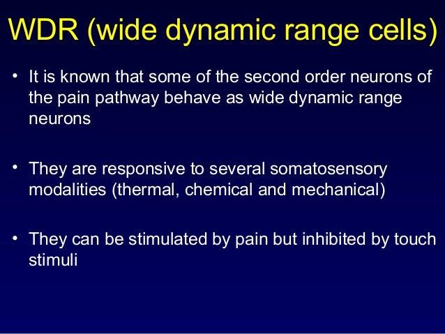 WDR (wide dynamic range cells) C fibre A fibre pain & mech mech inhibitory excitatory WDR cell