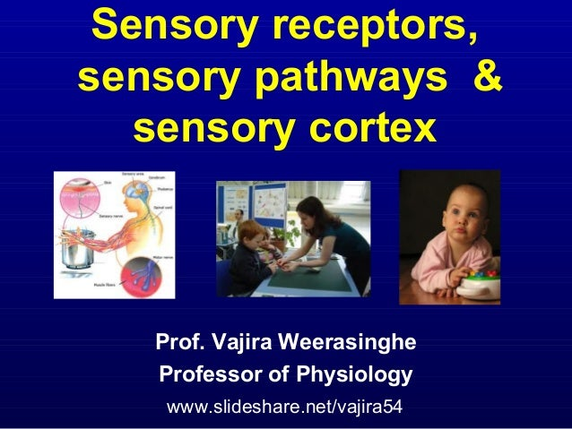 Sensory receptors, sensory pathways & sensory cortex Prof. Vajira Weerasinghe Professor of Physiology www.slideshare.net/v...