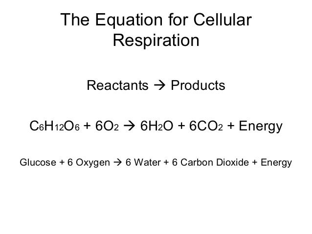 respiration cellular reactants equation notes cell 6o2 cr needed