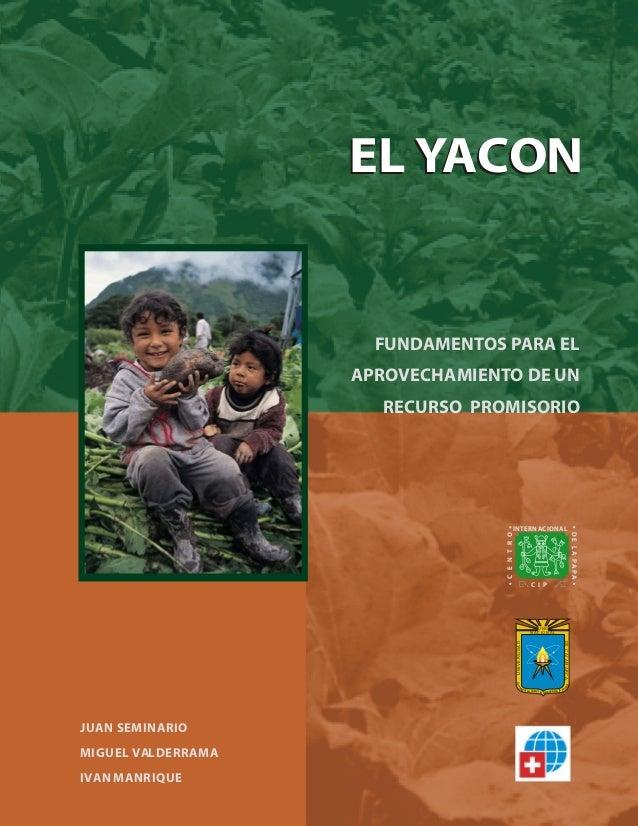 EL YACON  FUNDAMENTOS PARA EL APROVECHAMIENTO DE UN RECURSO PROMISORIO  C E N T R O  C I P  UNC DE CAJAMARCA  UNIVERSIDAD ...