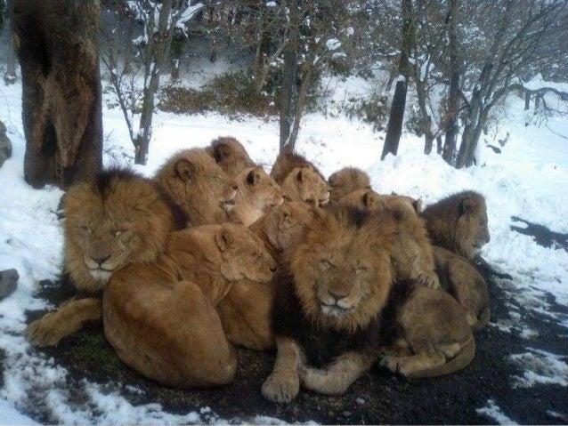Son lieu de travail est sur une réserve faunique près de Johannesburg, en Afrique du Sud.