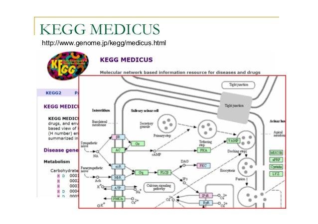 Metabolic Network Analysis