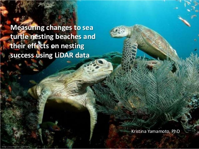 Measuring changes to sea turtle nesting beaches and their effects on nesting success using LiDAR data  Kristina Yamamoto, ...