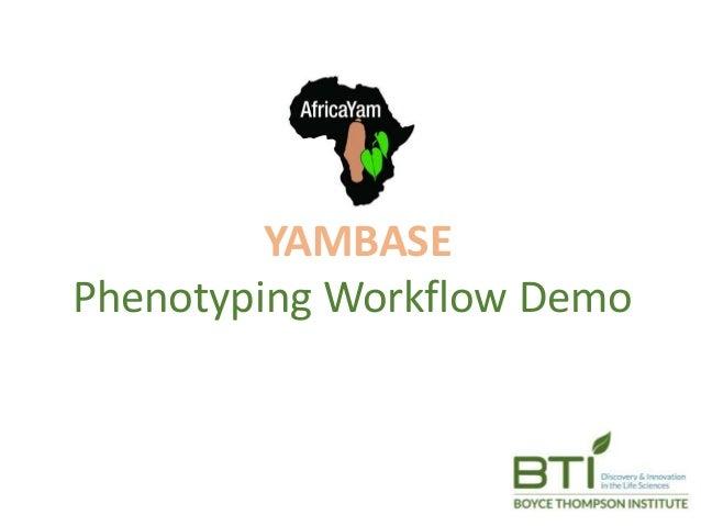 YAMBASE Phenotyping Workflow Demo