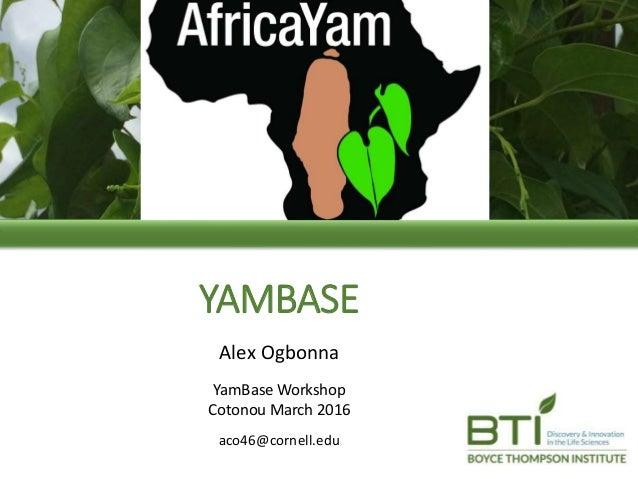 YAMBASE Alex Ogbonna YamBase Workshop Cotonou March 2016 aco46@cornell.edu
