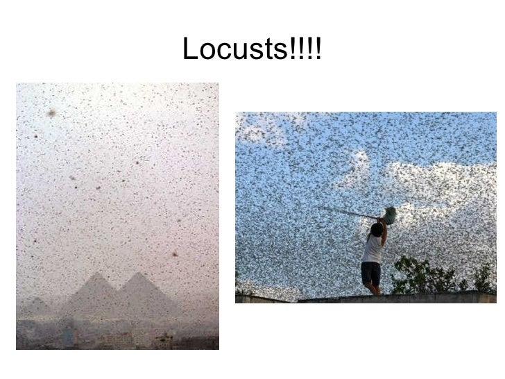 Locusts!!!!