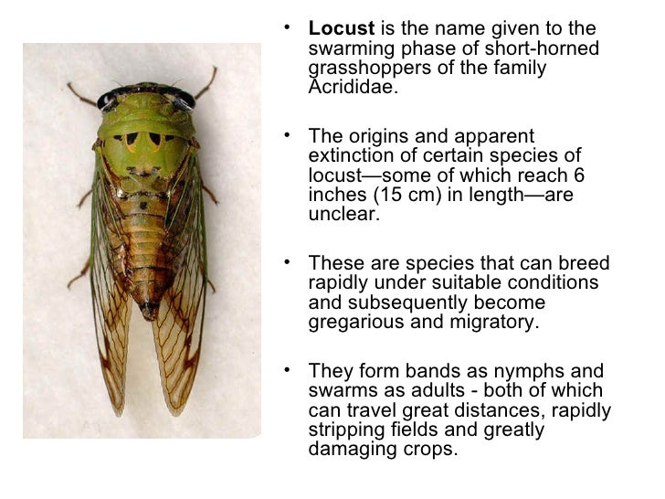 <ul><li>Locust  is the name given to the swarming phase of short-horned grasshoppers of the family Acrididae.  </li></ul><...