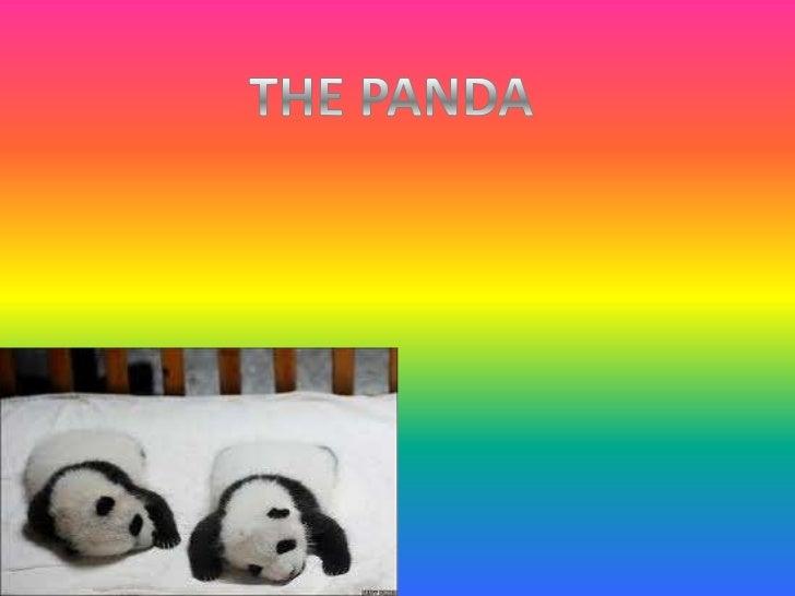 THE PANDA<br />