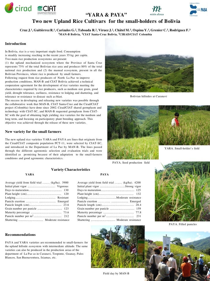 """""""YARA & PAYA""""                             Two new Upland Rice Cultivars for the small-holders of Bolivia                Cr..."""