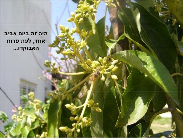 Yargazi Slide 2