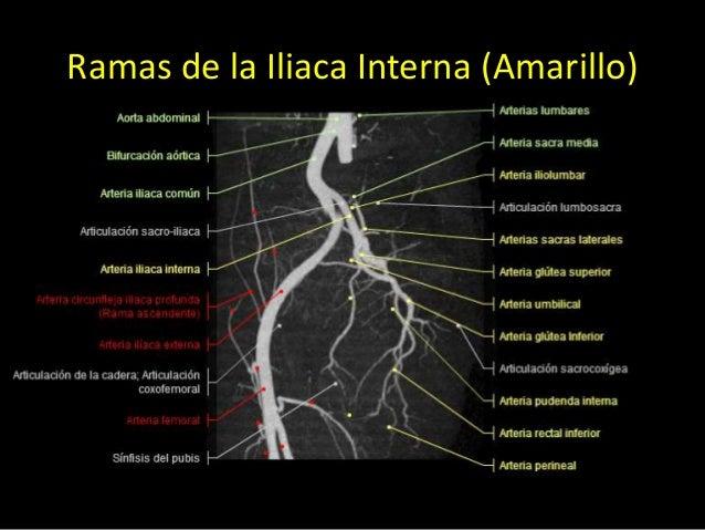 Anatomía Radiológica de las Arterias y Venas del MMII