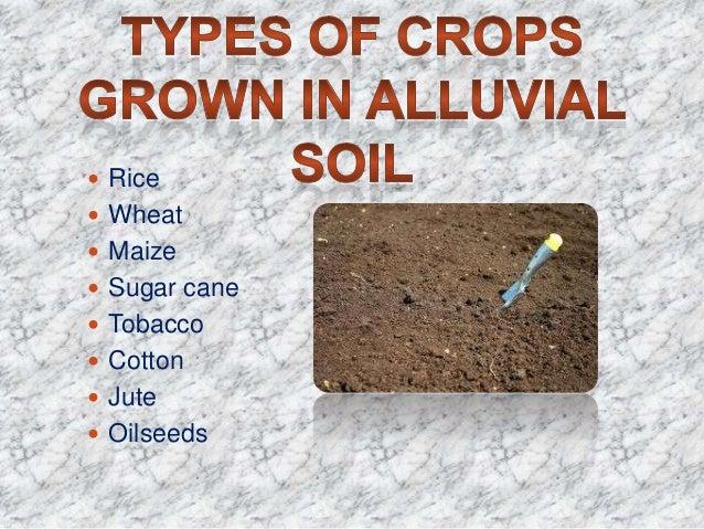 alluvial soil crops