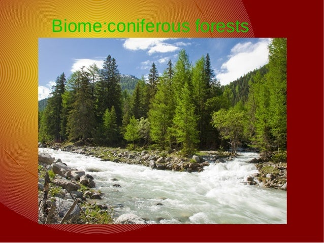Biome:coniferous forests