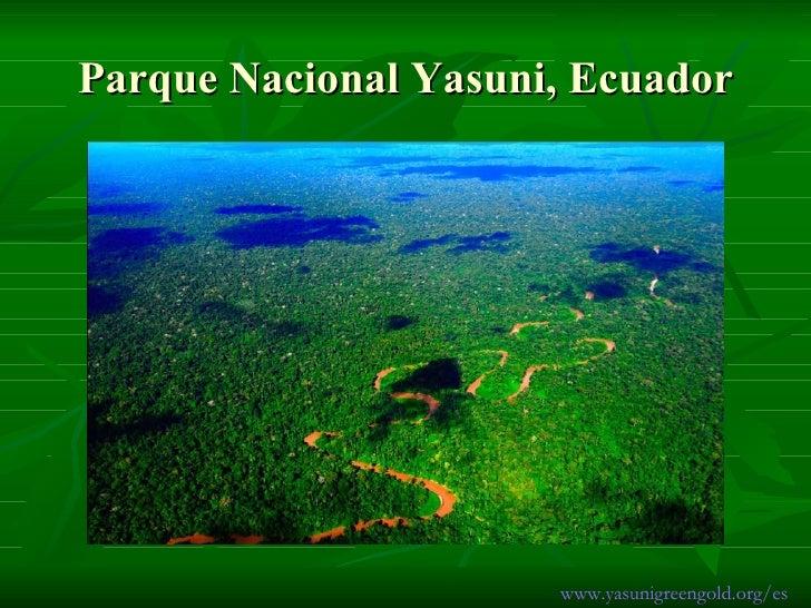 Parque Nacional Yasuni, Ecuador www.yasunigreengold.org/es