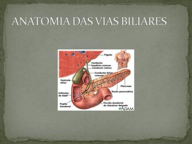VB normalmente não é identificada pela palpação. Somente palpável em condições patológicas