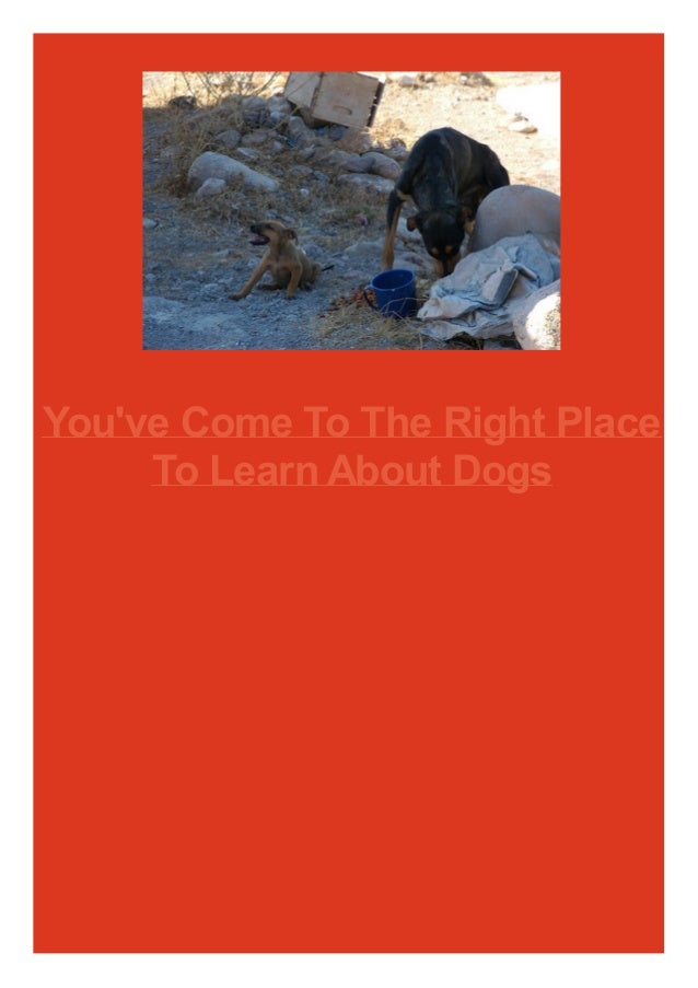 You've Come To The Right Place To Learn About Dogs