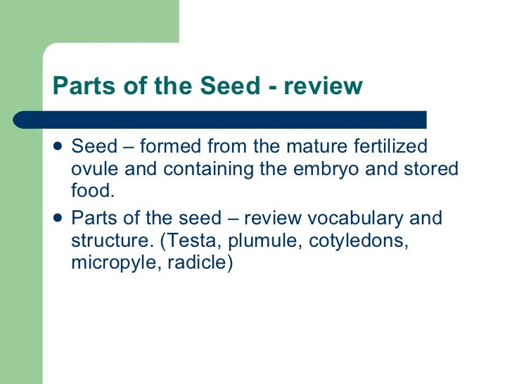 Stored Food In The Mature Seed