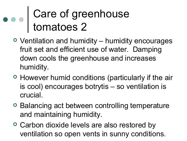 Care of greenhouse tomatoes 2  Ventilation and humidity – humidity encourages fruit set and efficient use of water. Dampi...