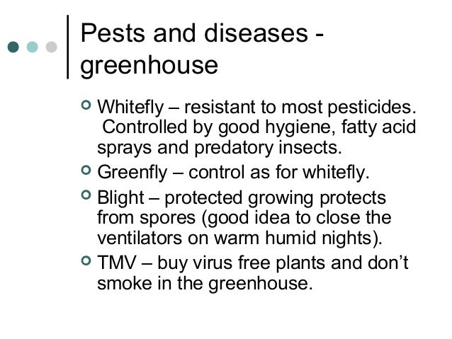 Pests and diseases - greenhouse  Whitefly – resistant to most pesticides. Controlled by good hygiene, fatty acid sprays a...