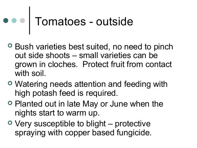 Tomatoes - outside  Bush varieties best suited, no need to pinch out side shoots – small varieties can be grown in cloche...
