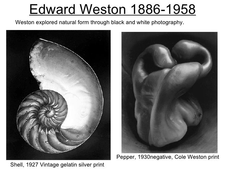 Edward Weston 1886-1958  Weston explored natural form through black and white photography.                                ...